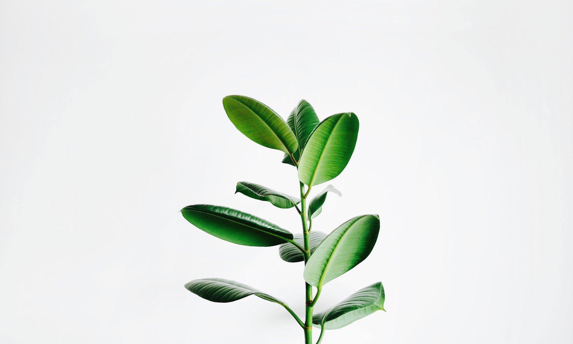 Plant against white background