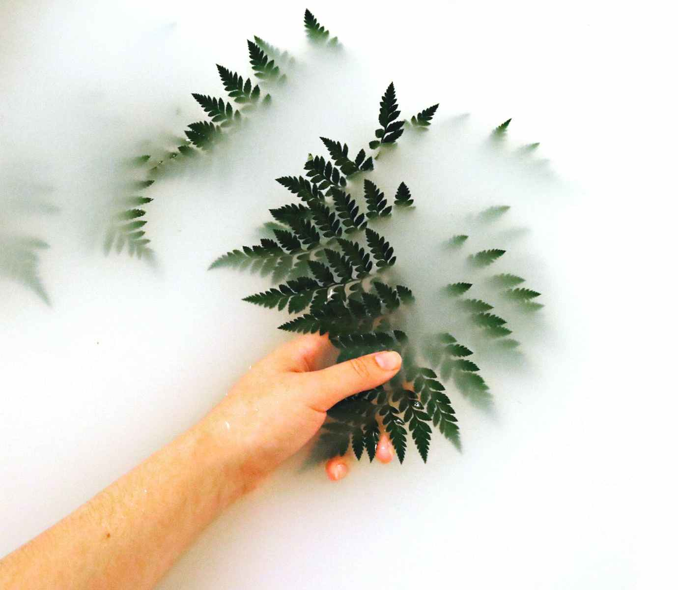Person touching leaves in a fog
